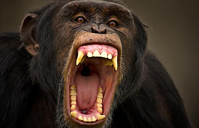 Mono loco arroja electrodomésticos en Betxí